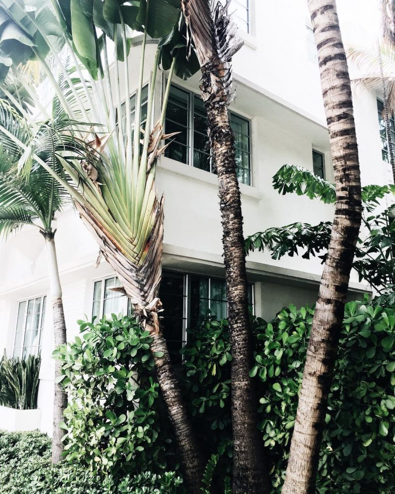 P a l m s #morning #miami #goodmorning #southbeach #palms #palmtrees #everywhere #happy #girl #to #be #here #travel #travelgram #pic #green #plants #love #live #explore #usa #moments #june